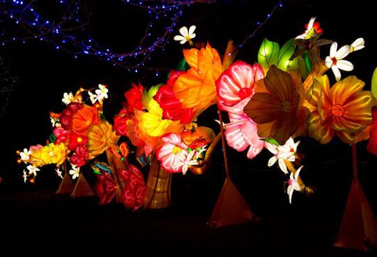 lanternflowersmain