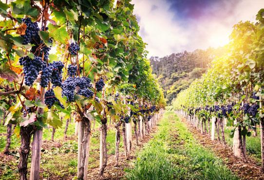 winerypost